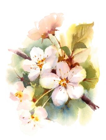 Cherry Blossom Branch Spring Flowers Watercolor achtergrond illustratie hand geschilderd