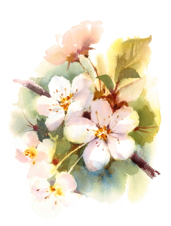 Cherry Blossom Branch Spring Flowers Watercolor Background Illustration Hand Painted