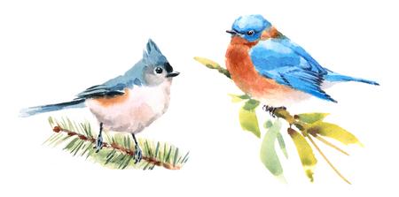Mees en Sialia Twee Vogelswaterverf Hand Geschilderde Illustratie die op witte achtergrond wordt geïsoleerd