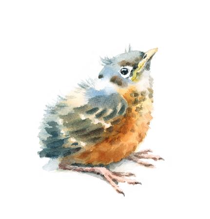 Baby Bird American Robin Aquarell handgemalt Illustration isoliert auf weißem Hintergrund Standard-Bild - 82864167