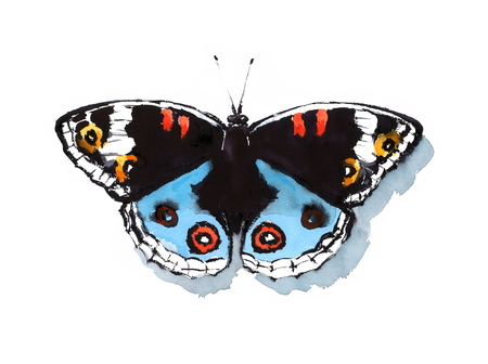 Tropical Buckeye Butterfly Watercolor Hand Painted Black Blue Illustration isolated on white background
