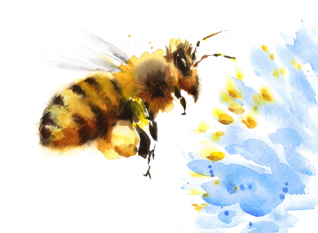 Watercolor Honey Bee Flying Over Blue Flower Hand Painted Summer Illustration isolated on white background