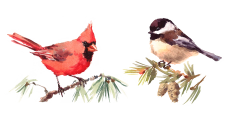 Northern Cardinal and Chickadee Two Birds Watercolor Hand Painted Illustration Set isolated on white background Stock Photo