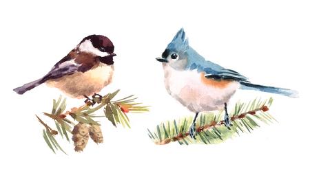 Titmouse and Chickadee 두 개의 수채화 손 그림 세트 격리 된 흰색 배경에 그린 스톡 콘텐츠