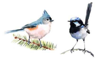 Titmouse and Fairy Wren Two Birds Watercolor Hand Painted Illustration Set isolated on white background