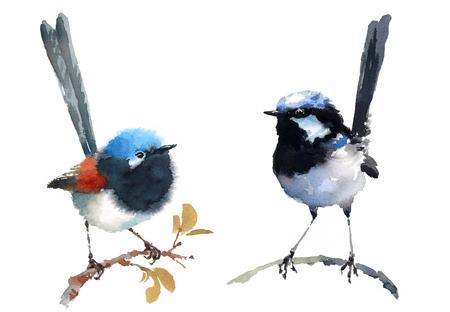 Fairy Wrens Two Birds Watercolor Hand Painted Illustratie Set geïsoleerd op een witte achtergrond