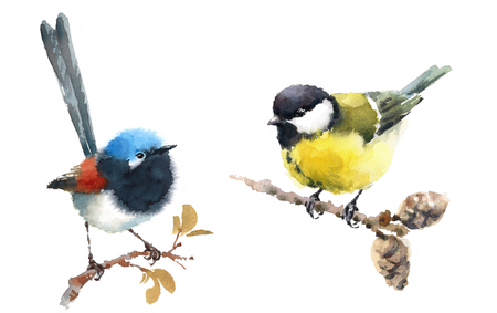 Fairy Wren and Tit Two Birds Watercolor Hand Painted Illustration Set isolated on white background