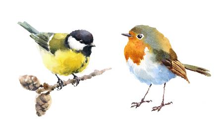 Robin en Mees Vogels Waterverf Hand Geschilderde Illustratie die op witte achtergrond wordt geïsoleerd