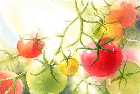 Rode en Groene Tomaten op de Wijnstok Waterverf Plantaardige Achtergrond Geschilderde Illustratiehand Stockfoto