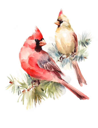 Male and Female Cardinals sitting on the Pine Branch Two Birds Watercolor Hand Painted Christmas Greeting Card Illustration