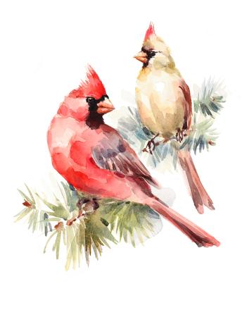 Cardinali maschii e femminili che si siedono sull'illustrazione dipinta a mano della cartolina d'auguri di Natale dell'acquerello del ramo del pino due uccelli Archivio Fotografico - 86906753