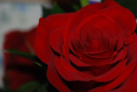 Single Red Rose from valentines day delivery boquet