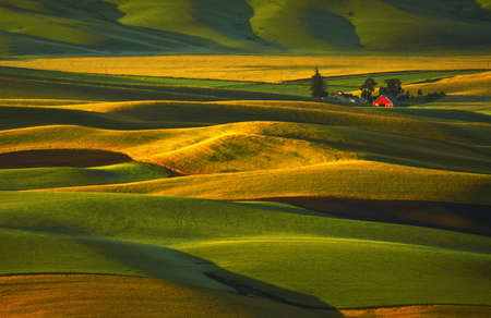 palouse: Good Morning Palouse Hills