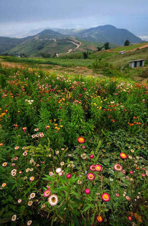 Colorful flower fields on the top of the hills called Phu Tub Berk in Petchabun, Thailand