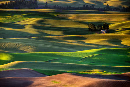 palouse: Palouse hills in the morning glow under the sun light