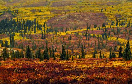 alaska: Colorful Fall foliage of Denali National Park on a cloudy and rainy day