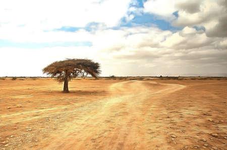 lone tree: Digital Paining  of Lone tree on an empty desert trail