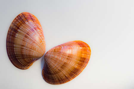 resemble: Two mollusc shells isolated against a white background placed to resemble butterfly wings