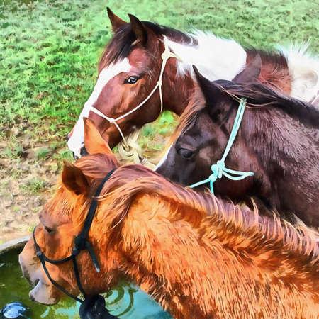 caballo bebe: Pintura digital de 3 caballos en un abrevadero
