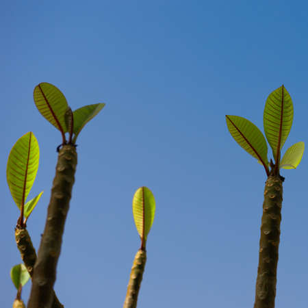 new beginnings: New beginnings of a plant sprouting new leaves against the background of a clear blue sky Stock Photo