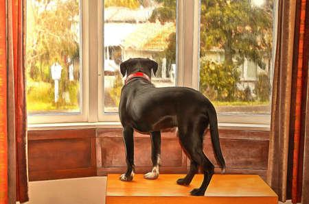 犬は飼い主を待っている窓の外を見て
