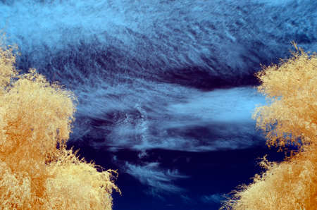 infra red: Infra red image of Tree with pale orange leaves against a blue sky filled with white clouds Stock Photo