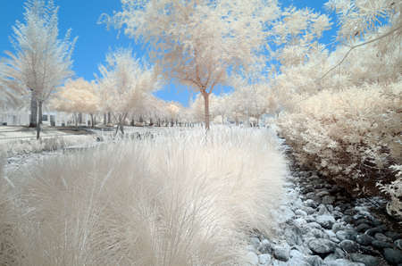 Infrared image of trees and shrubs in a park in false color