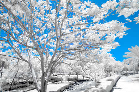 ir: Infrared  image of trees and shrubs in a park in false color Stock Photo