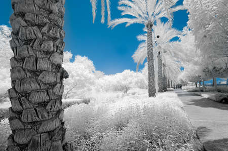 ir: Infrared image of trees and shrubs in a park in false color