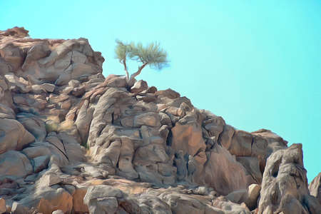 surviving: Lone shrub surviving in a an arid rocky landscape Stock Photo