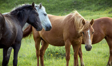 Group of horses on pasture photo