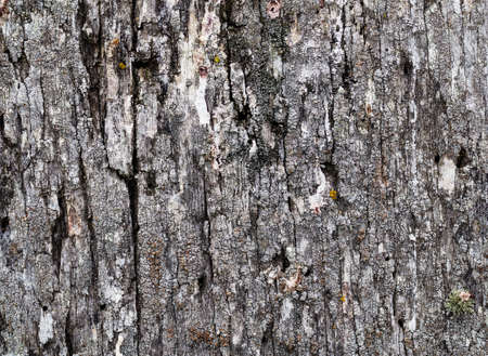 Wooden background, close up