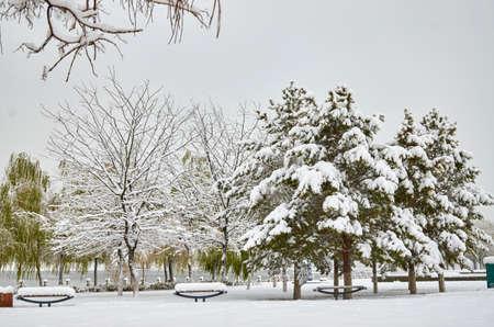 snowing: snowing scene