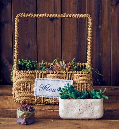 Wood frame succulents