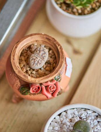 succulents plants Stock Photo