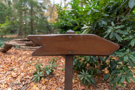 old wood direction arrow in forest
