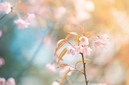 아침: 벚꽃 스톡 사진