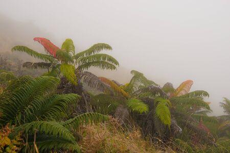 Kleurrijke Farn in mistige Haleakala Creater op Maui, Hawaï