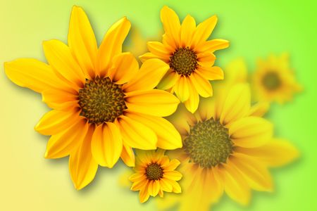 Yellow marguerite on blurred, yellow, green  background photo