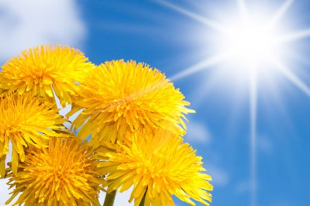 Spring flowers background, yellow flowers and blue sky with sun. Stock Photo - 6883576
