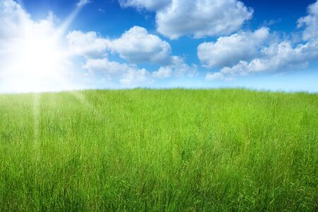 field of grass and perfect sky Stock Photo - 7098019