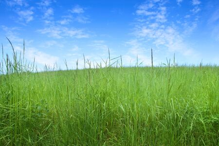 field of grass and perfect sky Stock Photo - 7098018