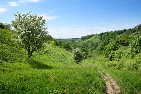summer landscape Stock Photo - 7098021
