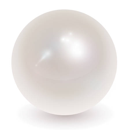 Beautiful pearl realistic  illustration. Vector