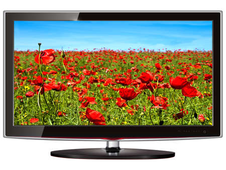 TV flat screen lcd, plasma with wild flowers on screen. Stock Photo - 8710465