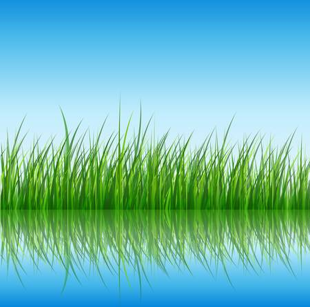 Nature background, green grass reflected in water, vector. Stock Vector - 9310338