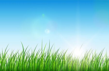 Nature green background, grass sun and blue sky, vector. Vector