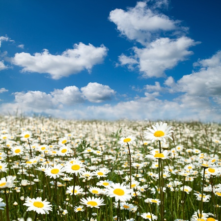 Flower summer field with blue sky. Stock Photo - 9603892