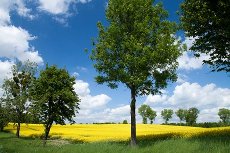 Summer landscape, Polish countryside and perfect sunny day. photo