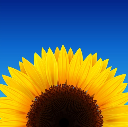floret: Sunflower background with blue sky.